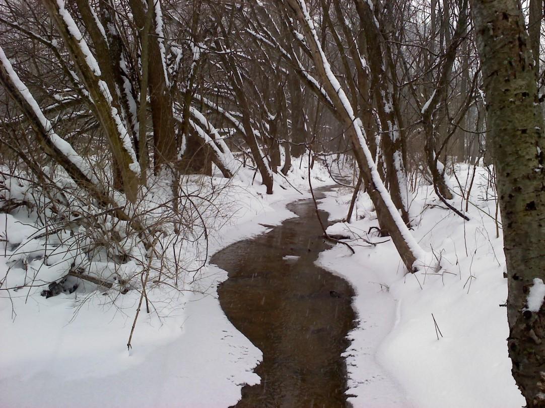woodsy creek