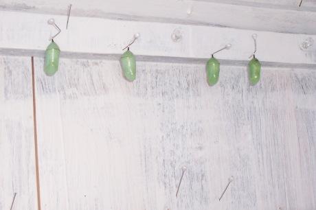 Monarchs in waiting