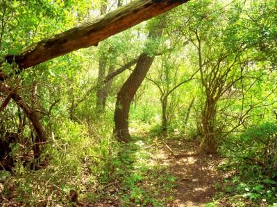 The Tulgey Wood